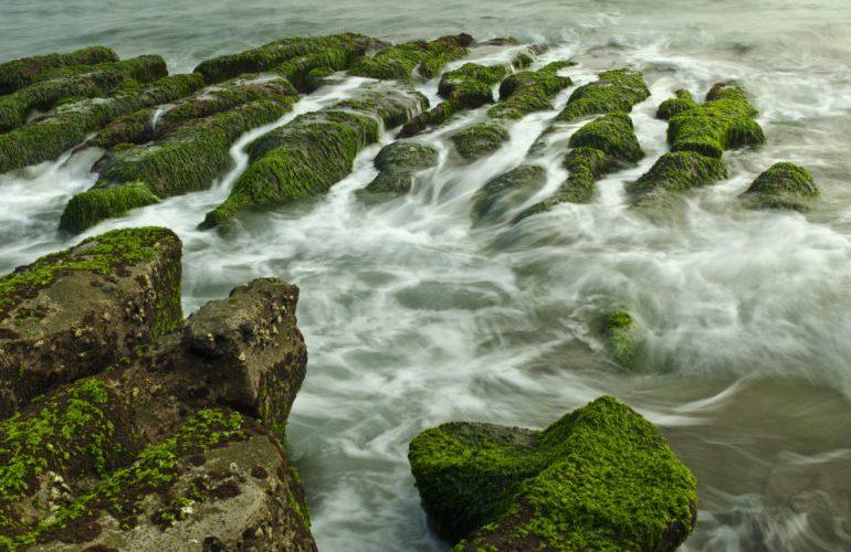 L'alga Chlorella è un superfood